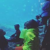 Wonder and Amazement at the Aquarium