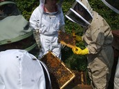 Two Day Beekeeping Course