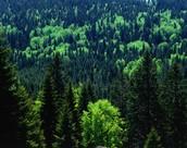 Dark Forests!