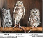 Different types of owls.