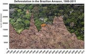 Deforestation Rates in the Brazilian Amazon