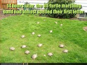 the turtle marching band