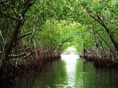 Everglades damaged