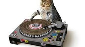 We will train your cat to be a DJ for $100