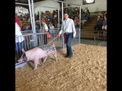 Six members represented the chapter by exhibiting livestock at the Fulton County Fair.