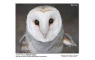 Meadow's favorite owl