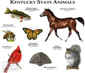 The State animals of Kentucky