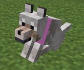 my doge in minecraft