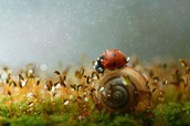 Bugs and Snails