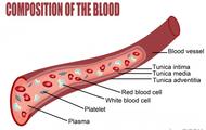 Blood Compostition