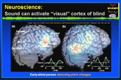 Sound activating visual cortex of blind