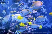 Aquarium♥