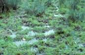 A wet grassland.