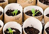 How to Grow Plants from Store Bought Fruits and Vegetables