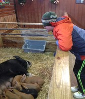 """""""A mamma pig and her babies!"""", Ben shouted. So happy!"""