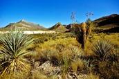 The desert in Trans Pecos