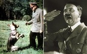 Hitler loved dogs and thought that they were very smart!