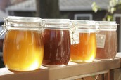 Honey Jars that first introduced Eva to beekeeping