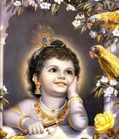 Why Krishna was cursed?