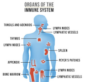 Learn more about the Immune system.
