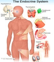 What organ systems are affected most?