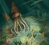 Dominant organisms living in the Ordovician