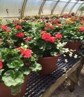 Planters: $12 Each