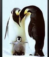 Penguins looking Down