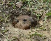 Will the Groundhog See His Shadow?