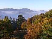Mischwald im Sauerland zur Herbstzeit.