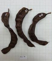 Fig 12 : Curved pods