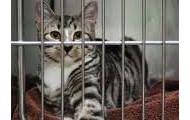 Grown cat at an animal shelter.