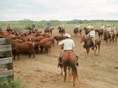 How did king ranch happen?