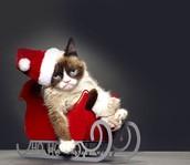 Sleigh ride!!!!