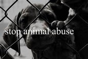 What is Animal abuse?