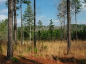 Georgia Aster Habitat