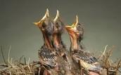 BIRDS SYMBOLISM/ MOTIF