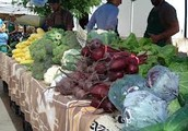 Our Market Sells the Best Produce in Town