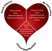 What to Do to help from getting cardiovascular disease(Heart Disease)