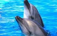 Nadar con los delfines
