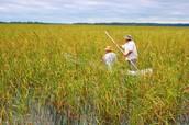Riceing lake