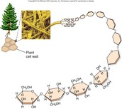 Polysaccharides: