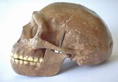 Capacitat cranial
