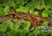 La Reserva Nacional de Pacaya - Samiria