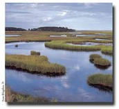 Fresh Water Marshes Introduction