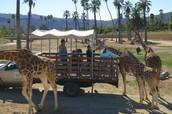 Caravan Safari