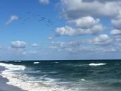 Florida Waves