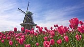 How to fit in with the Dutch?