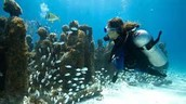 Cancun's Great Barrier Reef