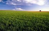 -Farming